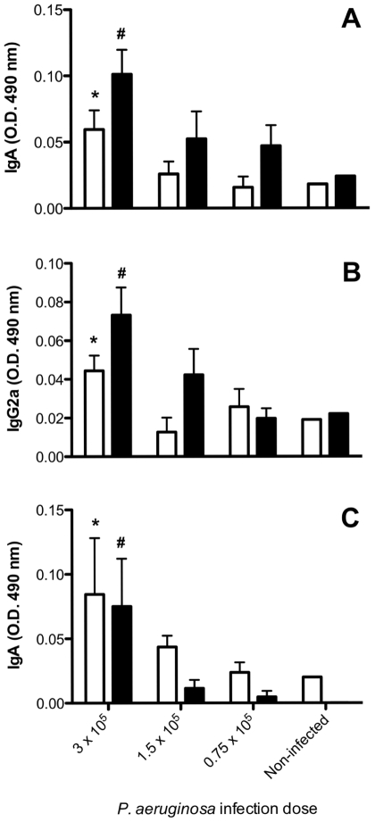 Pulmonary immune responses induced in BALB/c mice by Paracoccidioides brasiliensis conidia